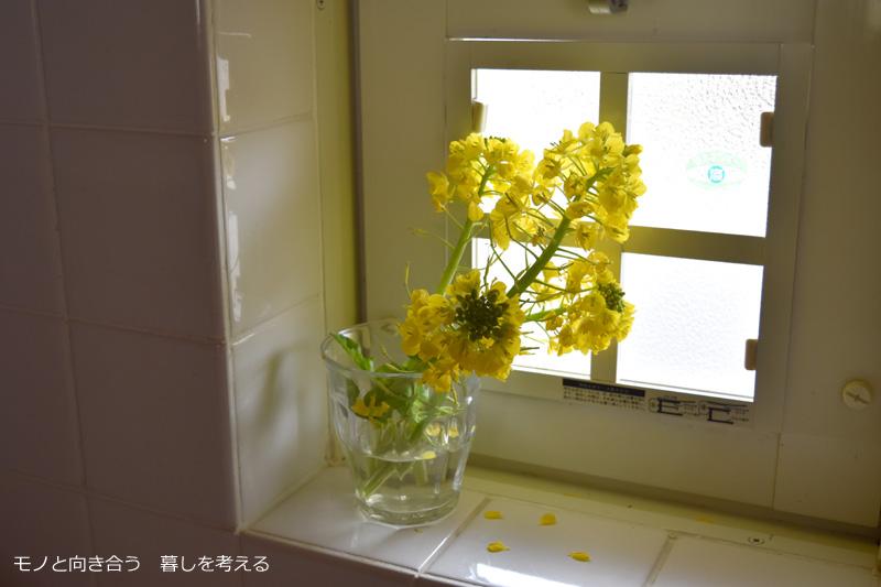 キッチンの窓辺に菜の花