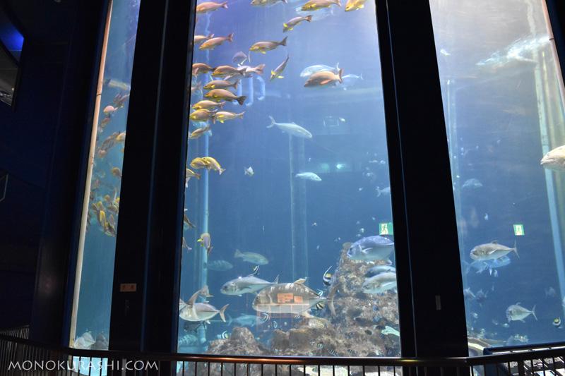 足摺海洋館、海洋水槽(大水槽)