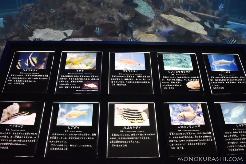 足摺海洋館、魚の説明パネル