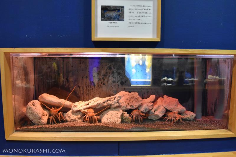 足摺海洋館、リョウマエビ