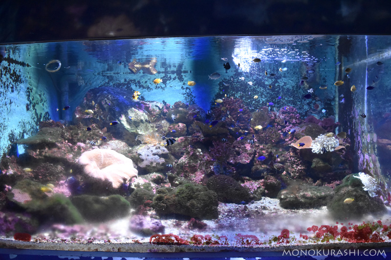足摺海洋館