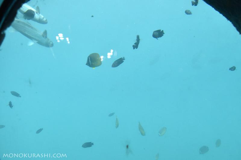 足摺海底館から見る海の中