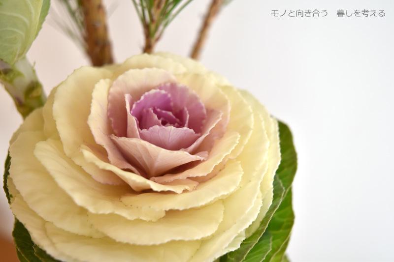 グラデーションがきれいな葉牡丹