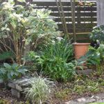 庭便り。初冬の庭から