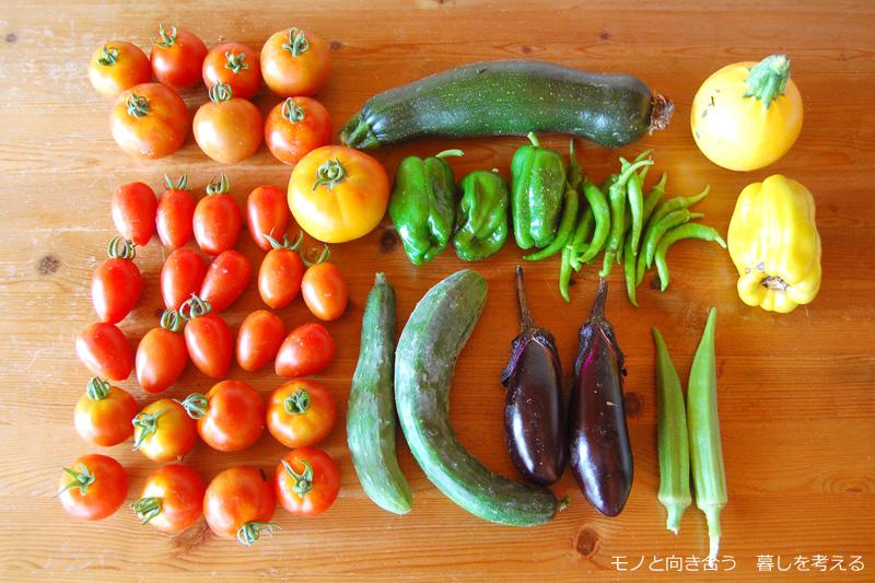 収穫した野菜たち