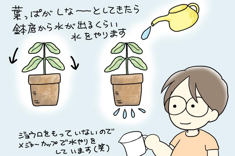 鉢植えの水遣りのタイミング