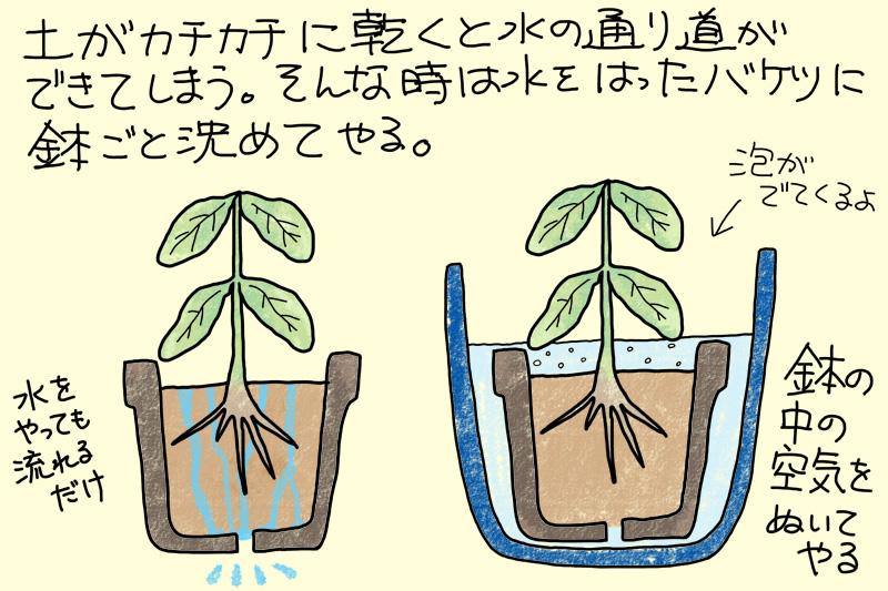 鉢植えの水遣りで気を付けたいこと