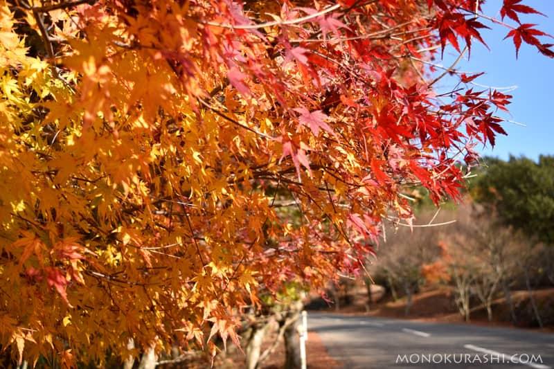 小豆島 寒霞渓の紅葉