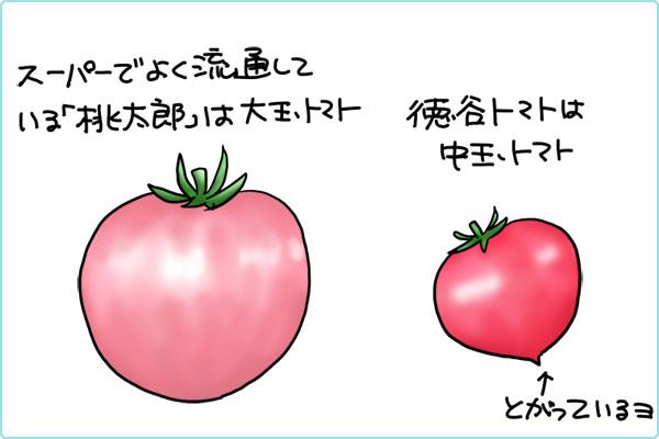 大玉トマトと中玉トマトの違い