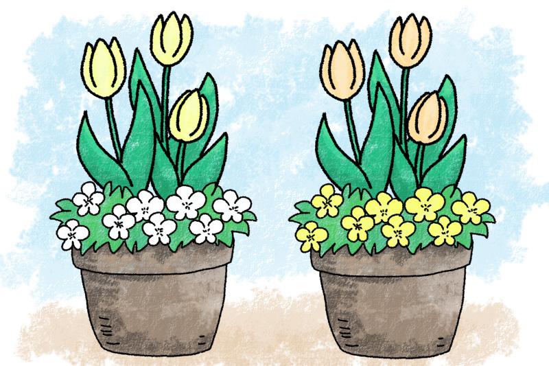 チューリップとビオラの寄せ植え