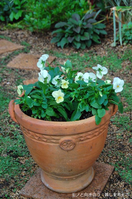 植木鉢にビオラ3苗を植える